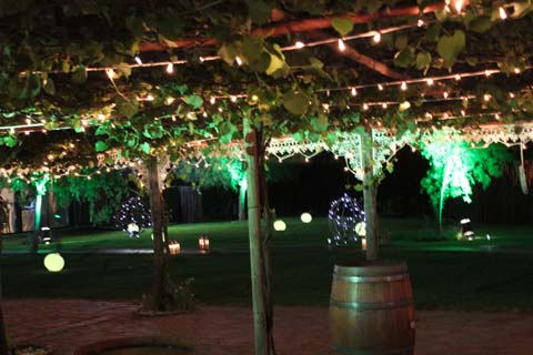 Wedding Venues in Cape Town Winelands